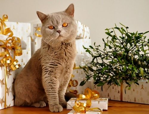Top 10 Christmas Risks For Your Pets and How to Avoid Them