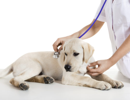 My pet is healthy, why do they need a wellness check?